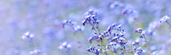 õrnad lilled