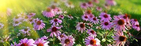roosad lilled